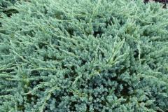 ju.-sq.-blue-carpet-10-14091822
